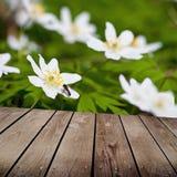 I fiori bianchi dell'anemone e svuotano la tavola di legno della piattaforma. Fotografia Stock Libera da Diritti