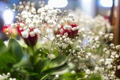 I fiori bianchi di Bristol Fairy del respiro dei bambini del gypsophila si chiudono su dentro fotografia stock