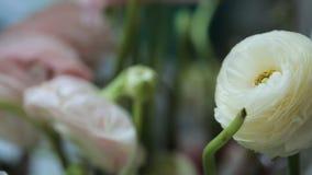 I fiori bianchi meravigliosi sui gambi verdi spessi stanno sulla tavola video d archivio
