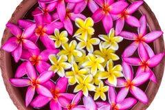 I fiori che galleggiano sull'acqua nel bacino delle terraglie isolano il fondo bianco Fotografia Stock Libera da Diritti