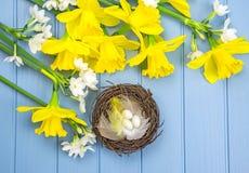 I fiori colorati primaverili con il ` s dell'uccello annidano la decorazione Fotografia Stock Libera da Diritti