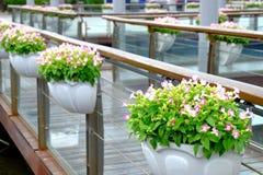 I fiori conservati in vaso nel parco della via fotografia stock libera da diritti