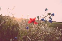 I fiori del campo lungo le strade di estate abbelliscono Immagine Stock