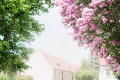 I fiori del cespuglio lilla sopra il villaggio alloggia il fondo Fotografie Stock Libere da Diritti
