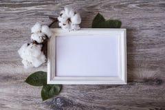 I fiori del cotone ornano la struttura bianca Fotografia Stock