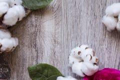 I fiori del cotone ornano la struttura bianca Fotografia Stock Libera da Diritti