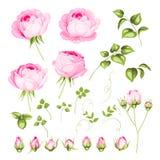 I fiori dell'annata hanno impostato illustrazione di stock