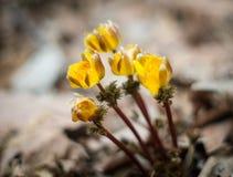 I fiori della molla Fotografia Stock Libera da Diritti