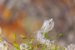 I fiori della palla del soffio sono in basso con lo spazio della copia fotografia stock libera da diritti