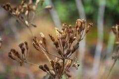 I fiori della pianta asciutta di zona fotografia stock libera da diritti