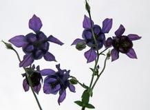 I fiori della raccolta sono blu fotografia stock