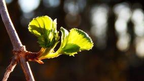 I fiori della sorgente immagine stock