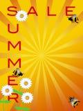 I fiori delle margherite del segno di vendita di estate e Bumble gli api illustrazione vettoriale