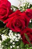 I fiori delle rose dell'Olanda si chiudono su Fotografia Stock Libera da Diritti
