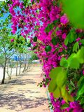 I fiori dentellano nel modo fotografia stock