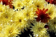 I fiori di autunno si chiudono sulle viste fotografia stock