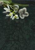 I fiori di bucaneve ed i rami del salice su Verde Guatemala marmorizzano la s fotografie stock libere da diritti