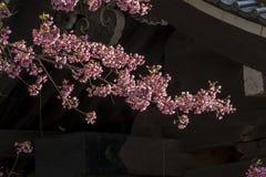 I fiori di ciliegia è la priorità alta delle ombre dalla costruzione Fotografie Stock Libere da Diritti