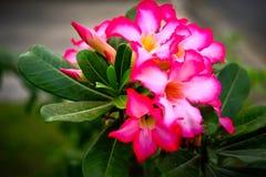 I fiori di colore rosso Fotografie Stock