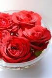 I fiori di colore rosso sono aumentato Immagine Stock