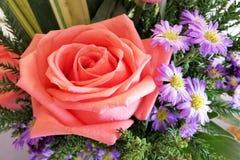I fiori di Rosa sono molto bei fotografie stock