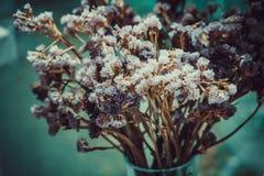 I fiori di Statice appassiscono Immagini Stock