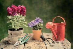 I fiori e gli strumenti di giardino sulla tavola di legno riscaldano il filtro applicato Fotografia Stock Libera da Diritti