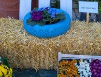 I fiori e la pianta in vecchia gomma hanno dipinto il colore pastello fotografie stock