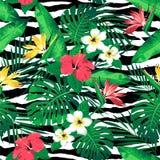 I fiori e le foglie tropicali sulla zebra hanno barrato il fondo seamless Immagini Stock