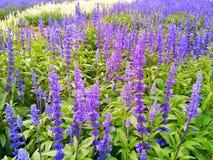 I fiori e le piante stanno fiorendo Immagini Stock