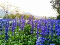 I fiori e le piante stanno fiorendo Fotografia Stock Libera da Diritti