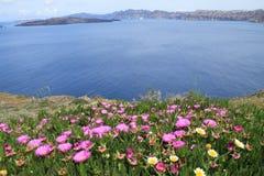 I fiori e vedono Fotografia Stock Libera da Diritti