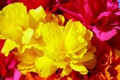 I fiori fatti di carta Fotografie Stock Libere da Diritti