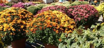 I fiori fino voi possono vedere Immagini Stock