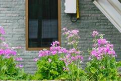 I fiori fuori della mia finestra della casa fiorisce la fioritura fotografie stock