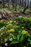 I fiori gialli e bianchi brucia in profondità nel legno Immagini Stock