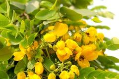 I fiori gialli, petali si assottigliano e piccolo Fotografia Stock