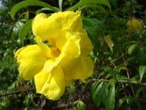 I fiori gialli stanno fiorendo al sole durante Immagine Stock