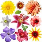 I fiori hanno impostato Fotografie Stock Libere da Diritti