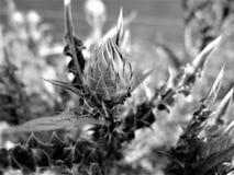 I fiori hanno sparato in uno stile di arti in uno studio Immagine Stock Libera da Diritti