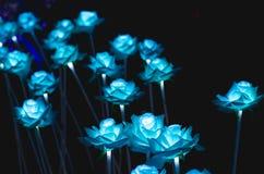 I fiori hanno una notte leggera Fotografia Stock Libera da Diritti