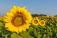 i fiori isolati espongono al sole il bianco Immagini Stock Libere da Diritti