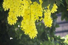 I fiori moltiplicano sbocciare sull'albero fotografia stock libera da diritti