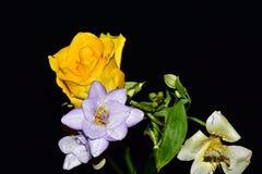I fiori molto abbastanza multicolori si chiudono su immagine stock