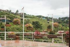 I fiori multicolori fioriscono in vasi da fiori sulla via Immagine Stock