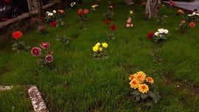 I fiori nel giardino Fotografia Stock Libera da Diritti