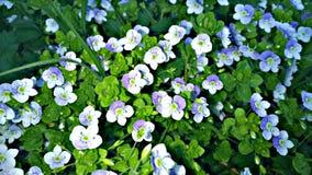 I fiori nel giardino vegetazione Immagine Stock
