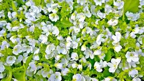 I fiori nel giardino vegetazione Fotografia Stock