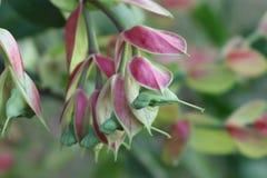 I fiori nel giardino vegetazione Fotografie Stock