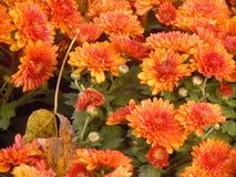 I fiori nell'inverno Fotografia Stock Libera da Diritti